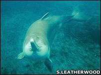 Delfín chino de agua dulce. Imagen de Stephen Leaderwood de la Sociedad Zoológica de Londres
