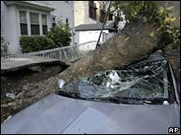 Tree smashes car in Bay Ridge, Brooklyn, New York