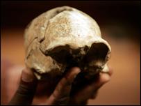 Cráneo de Homo Erectus, de hace 1,55 millones de años, hallado en Kenia en 2000.
