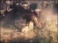 Imágenes del video