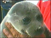 Nerpa seal (file pic)