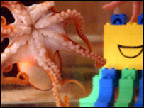 Ozzie the octopus and his building blocks