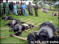 Rangers standing next to the four dead gorillas (Image: Altor IGCP Goma from August 07)