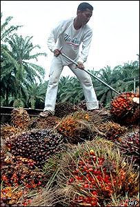 Trabajador en una plantación de palma destinada a la producción de biocombustibles