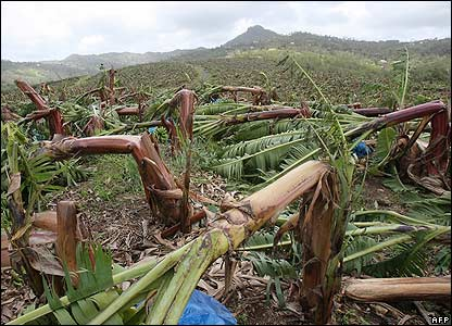 Banana plantation destroyed in Martinique