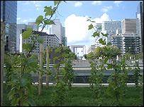 Los viñedos de La Défense, al oeste de París