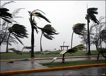 Palm trees were buffeted and some were uprooted during the storm