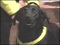 Fred the sniffer dog