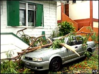 A car wrecked by a fallen tree in Roseau, Dominica