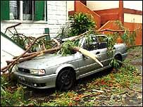 Automóvil bajo las ramas de los árboles arrancadas por el huracán