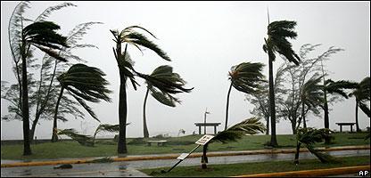 Palmeras azotadas por la fuerza de un huracán.