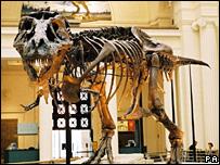 T. rex, PA