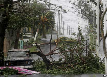 Ripped out trees in Chetumal