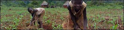 Children working the land in Zimbabwe
