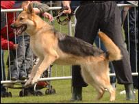 Police dog Jake