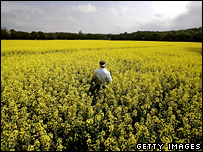 Rapeseed field  Image: Getty
