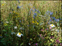 Wild flowers in a meadow  Image: BBC