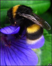 Bumblebee, PA