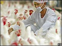 Trabajador de una granja en Indonesia