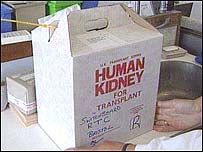 علبة تحتوي كلية بشرية