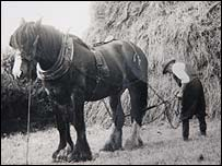 Worker on Luson farm in the 1950s