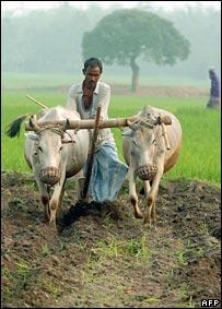Farmer. Image: AFP