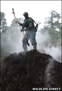 A ranger destroys a pile of charcoal (Image: WildlifeDirect)