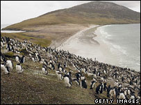 The islands are a breeding ground for millions of penguins