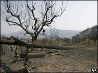 A gutted olive grove in the village of Artemida, southern Greece. File photo