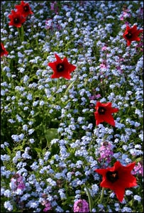 Flower bed (Image: BBC)