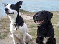 Pet dogs (BBC)