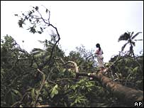 A woman stands on a fallen tree after Hurricane Felix passed in Puerto Cabezas, Nicaragua
