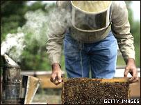 Un apicultor revisa la colmena.