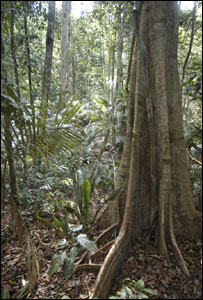 Library image of a rainforest (Image; BBC)