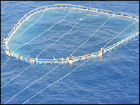 Migrants cling onto a tuna net