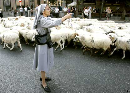 A nun takes photos of a flock of sheep as they pass through the streets of in Madrid