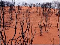 Desierto australiano
