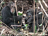 Chimps sharing