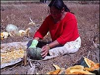 Campesina mexicana despepita calabazas para aprovechar la semilla