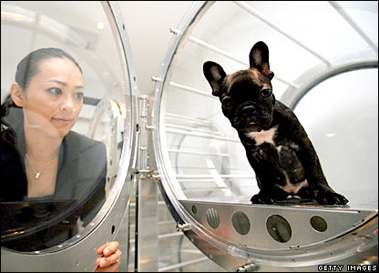 A dog sites in an oxygen capsule at a demonstration of the relaxation device for animals in Tokyo, Japan