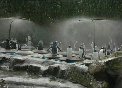 Penguins under sprinklers