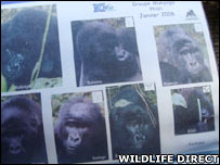 Gorilla family. Image: Wildlife Direct