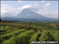 Volcano. Image: Wildlife Direct