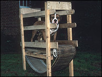 Pit bull terrier on makeshift treadmill. Pic courtesy RSPCA