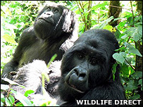 Gorillas (Image: WildlifeDirect)