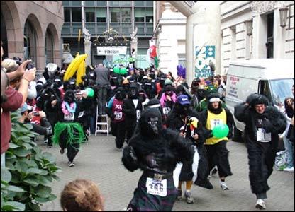 Gorillas at start. Copyright: Dave Cameron