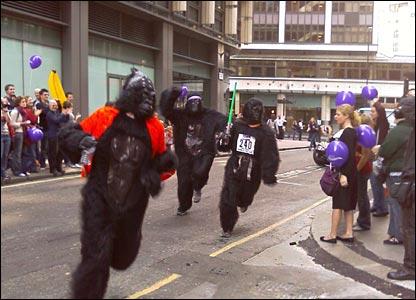 Gorillas run a bend. Copyright: Davie Loosemore