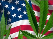 Planta de marihuana con la bandera de Estados Unidos como fondo