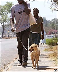 Zimbabweans walking a dog