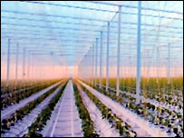 Computer image of one of the greenhouses